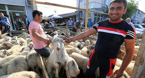 "Sale of sheep in the market. Photo by Aziz Karimov for the ""Caucasian Knot"""