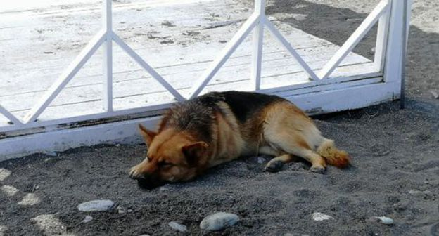 Zoo defenders tell about a new wave of extermination of animals in Sochi